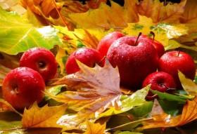 v_155_155_podzim_jablka